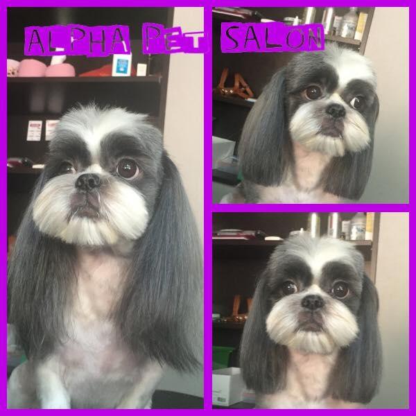 Salon de frizerie canina AlphaPet